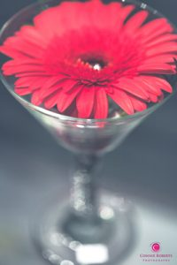 Martini Glass Gerbera Daisy