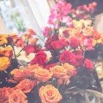 Cooler full of roses