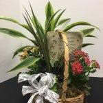 Green Plants Memorial Basket