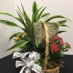 Green Plants Memorial Basket