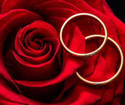 Red Rose with Wedding Rings