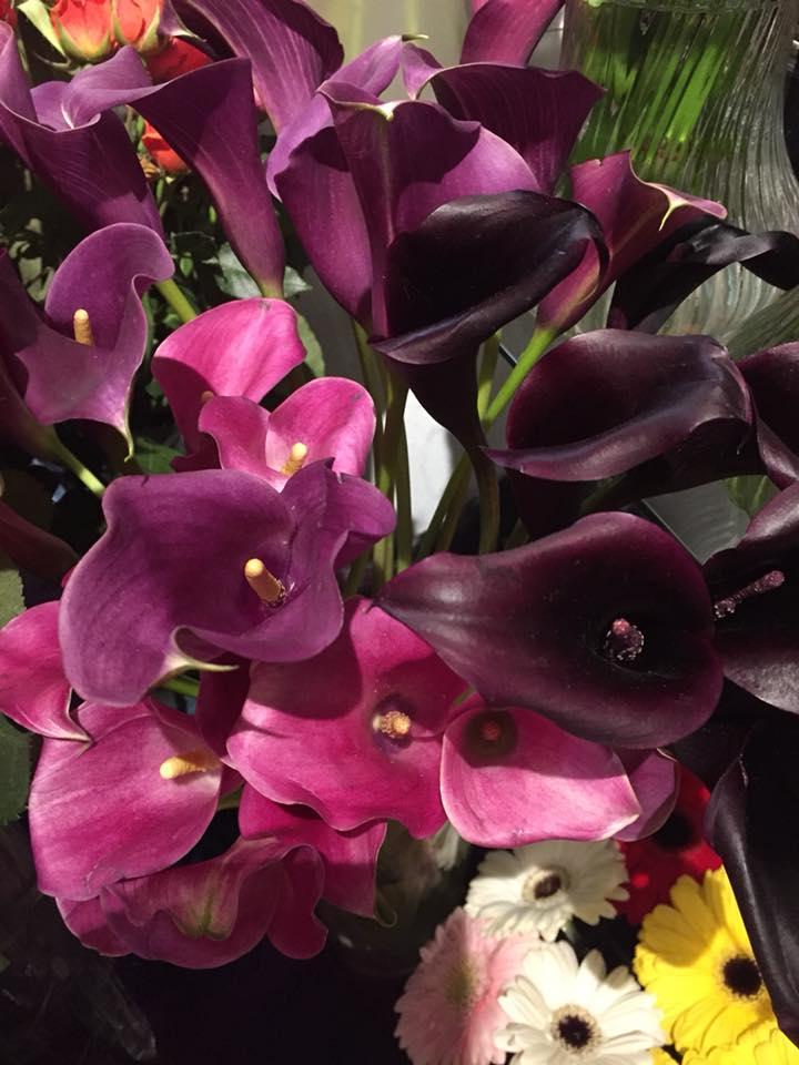 Deep Purple Cala Lilies for Valentine's Day at Casa de Flores